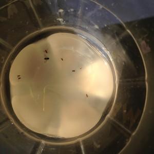 蚊取りボトルでは蚊が全然取れない